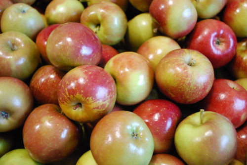 top 5 fall super foods - apples